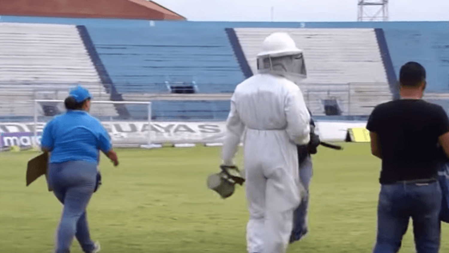 Match abandoned due to a swarm of bees